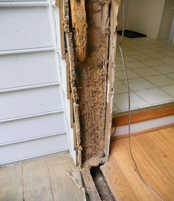Termite damage to an unprotected door frame.