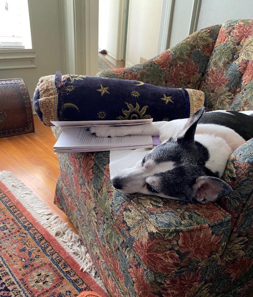 Dog relaxing on a comfy couch- TERM Sustainability