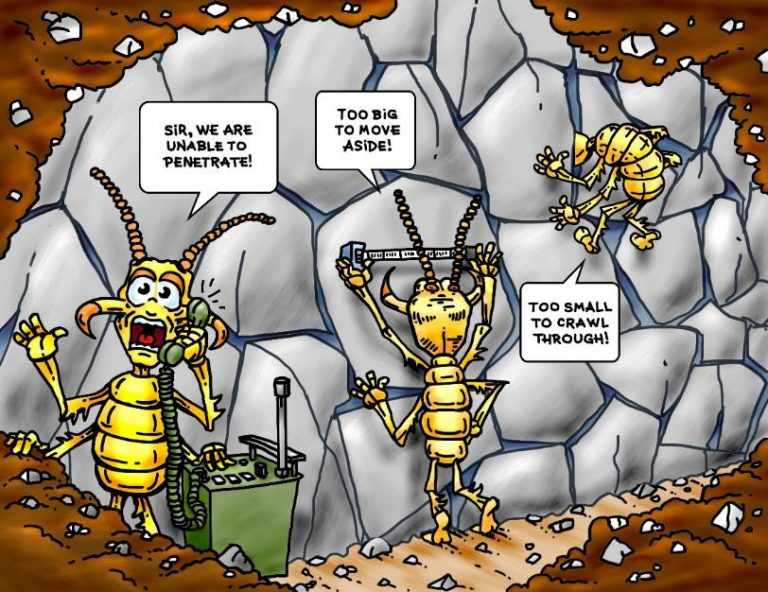 TERM Termite Graphic